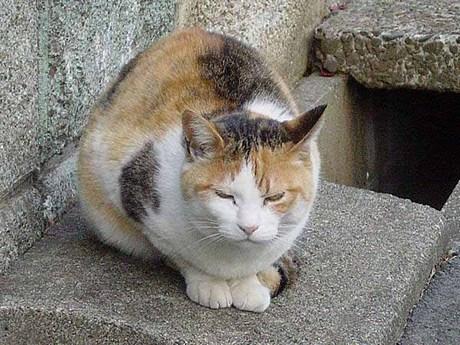 三毛猫-dsc00836.jpg