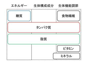 栄養の分類.JPG