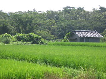 水田の風景.jpg