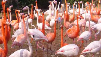 Flamingo03_960.jpg