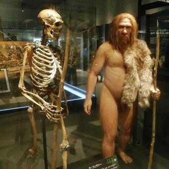 1024px-Skeleton_and_restoration_model_of_Neanderthal_La_Ferrassie_1.jpg